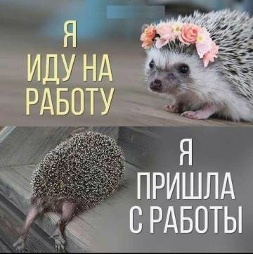 http://s3.uploads.ru/t/V6ADY.jpg