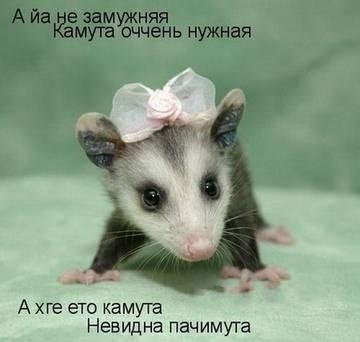 http://s3.uploads.ru/t/VBAya.jpg