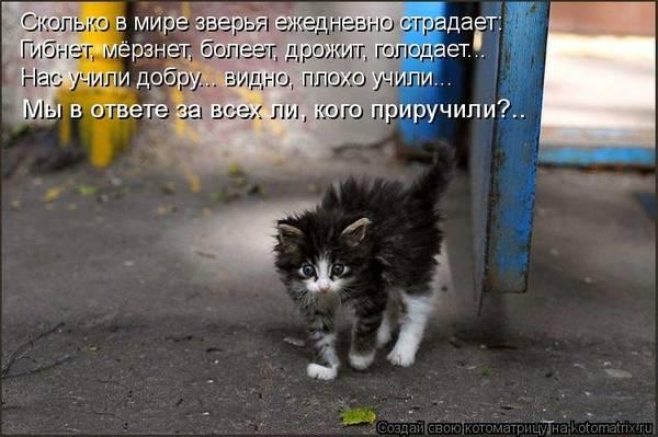 http://s3.uploads.ru/t/X2wam.jpg