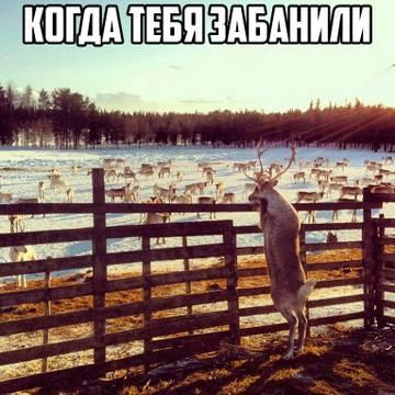 http://s3.uploads.ru/t/X91uZ.jpg