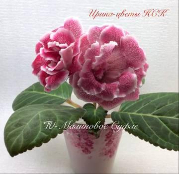 http://s3.uploads.ru/t/YI35y.jpg