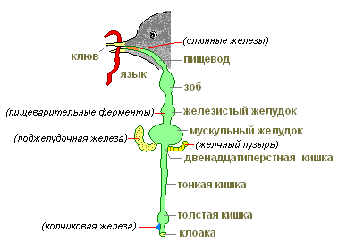 http://s3.uploads.ru/t/YcWzR.png