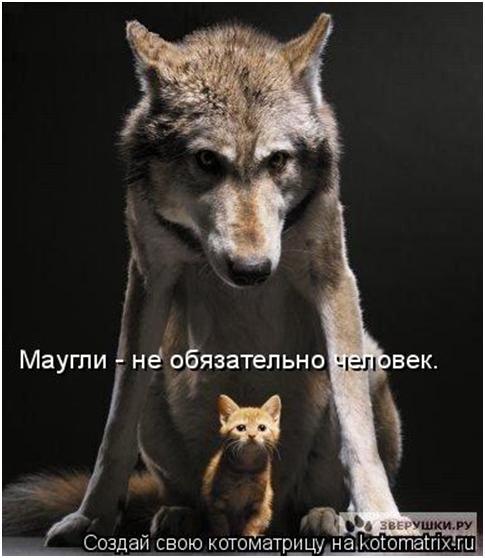 http://s3.uploads.ru/t/YwLCj.jpg