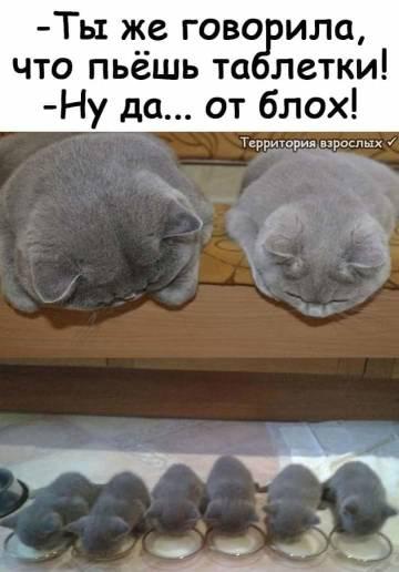 http://s3.uploads.ru/t/Z3cQs.jpg