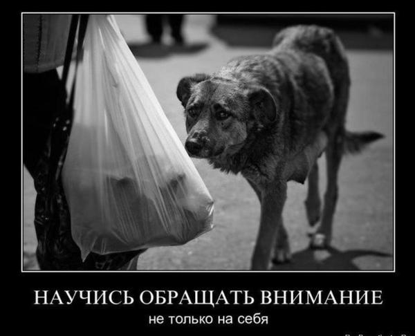http://s3.uploads.ru/t/ZO4Um.png