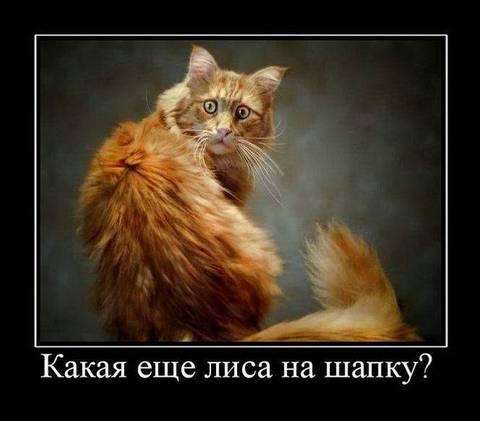 http://s3.uploads.ru/t/ZbNqv.jpg