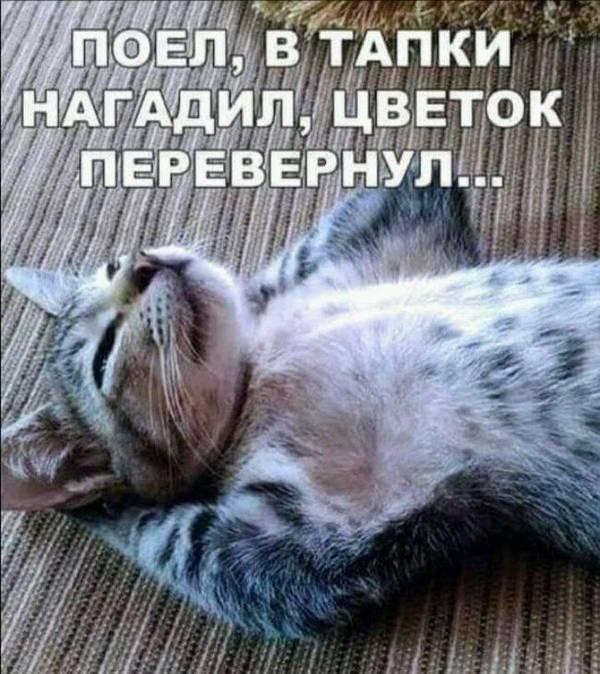 http://s3.uploads.ru/t/aUCsl.jpg