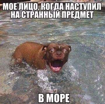 http://s3.uploads.ru/t/afESh.jpg