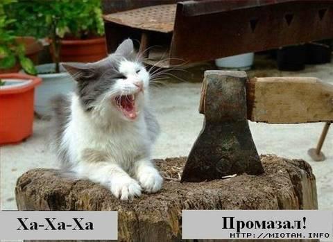http://s3.uploads.ru/t/c1mfL.jpg