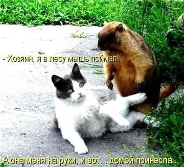 http://s3.uploads.ru/t/cHadu.jpg