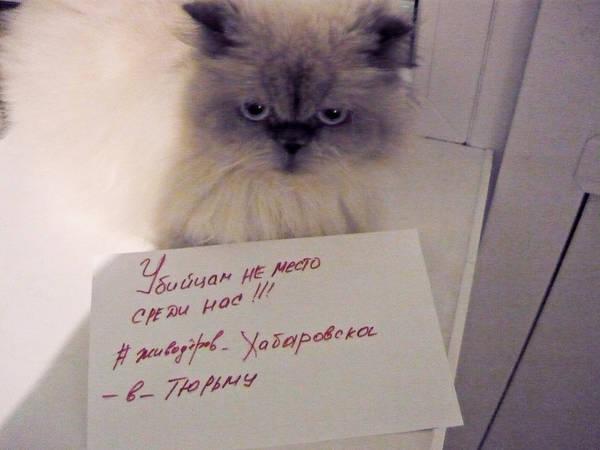 http://s3.uploads.ru/t/dUDJv.jpg