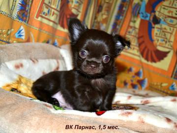 http://s3.uploads.ru/t/e2pOs.jpg