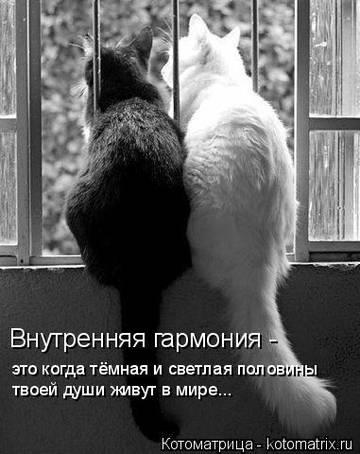 http://s3.uploads.ru/t/e2yfm.jpg