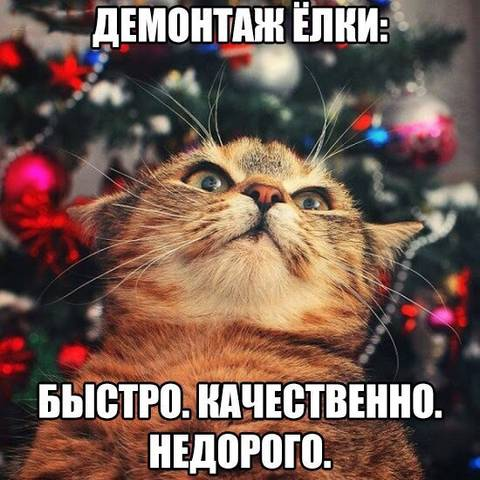 http://s3.uploads.ru/t/emu60.jpg