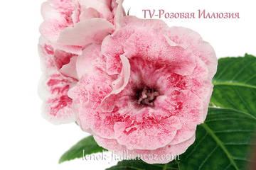 http://s3.uploads.ru/t/fCGe8.jpg
