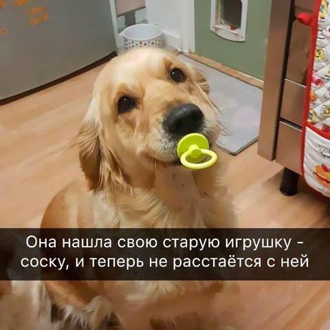 http://s3.uploads.ru/t/fhRj6.jpg