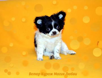 http://s3.uploads.ru/t/fuIbK.jpg