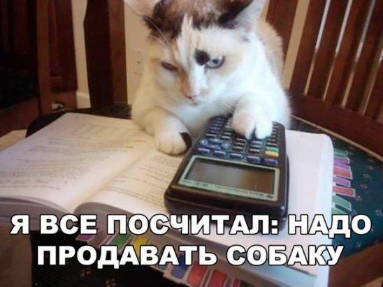 http://s3.uploads.ru/t/hsmuQ.jpg