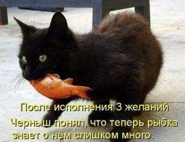 http://s3.uploads.ru/t/jFaXA.jpg