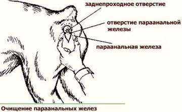 http://s3.uploads.ru/t/jOsQd.jpg