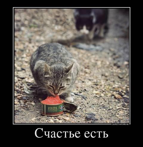 http://s3.uploads.ru/t/jxulG.jpg