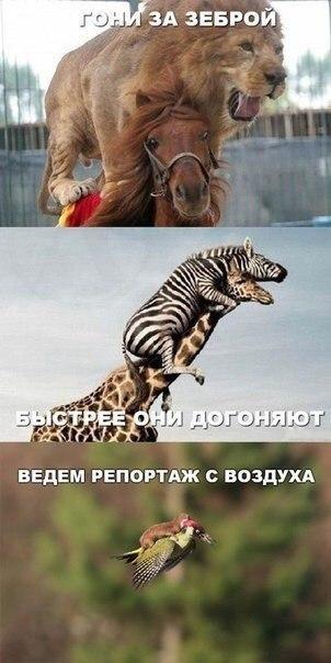 http://s3.uploads.ru/t/k2oNQ.jpg