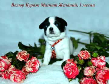 http://s3.uploads.ru/t/k9Zco.jpg