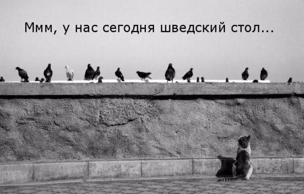http://s3.uploads.ru/t/kdgaM.jpg