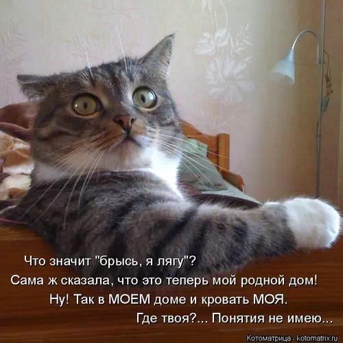 http://s3.uploads.ru/t/kdrcf.jpg