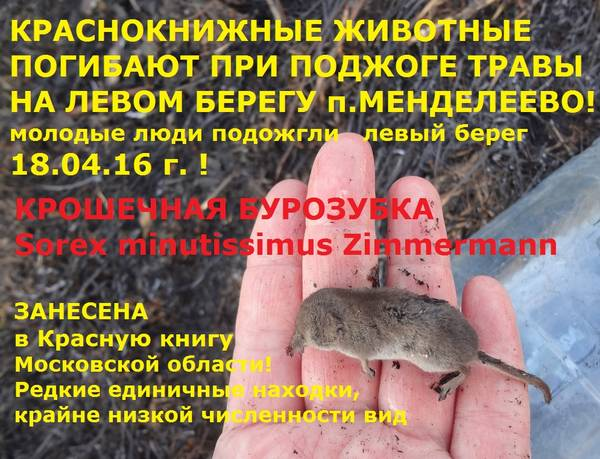 http://s3.uploads.ru/t/klibZ.jpg
