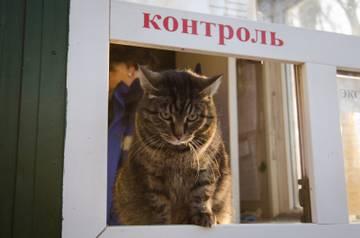 http://s3.uploads.ru/t/knXWh.jpg