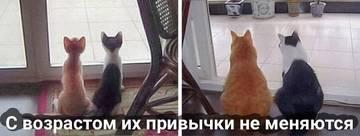http://s3.uploads.ru/t/l2mXk.jpg