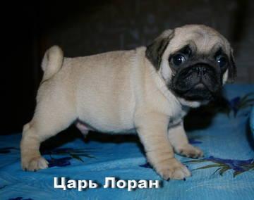 http://s3.uploads.ru/t/lIwWC.jpg