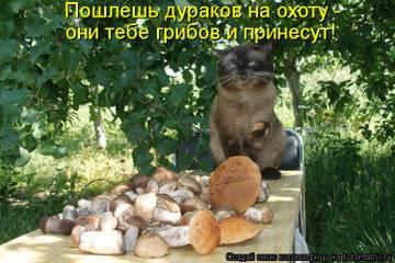 http://s3.uploads.ru/t/lLhaZ.jpg