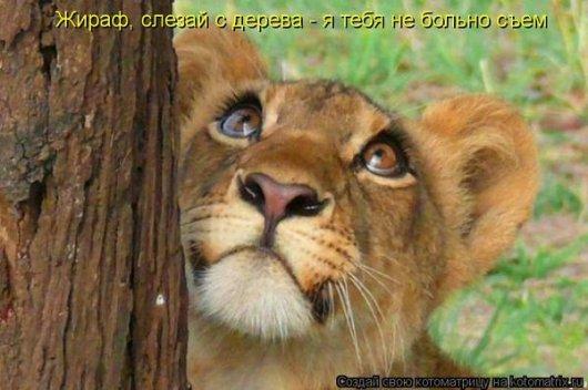 http://s3.uploads.ru/t/ldeHQ.jpg