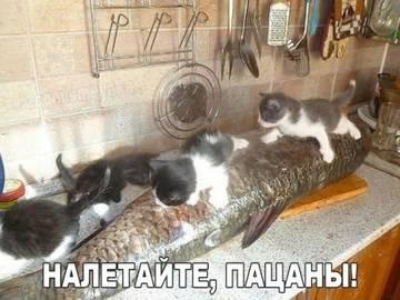 http://s3.uploads.ru/t/mSUY5.jpg