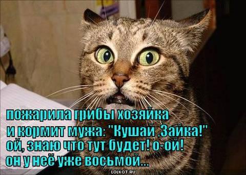 http://s3.uploads.ru/t/n2skF.jpg