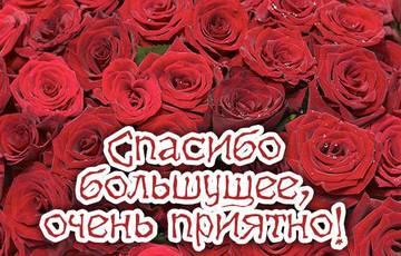 http://s3.uploads.ru/t/nYAs4.jpg