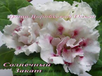 http://s3.uploads.ru/t/nhoQI.jpg