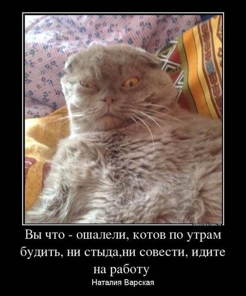 http://s3.uploads.ru/t/o1jvl.jpg