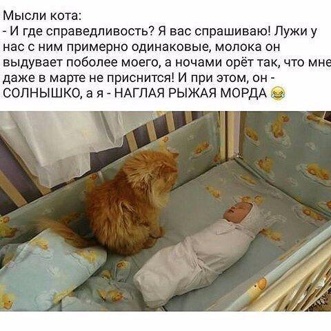 http://s3.uploads.ru/t/o5jCu.jpg