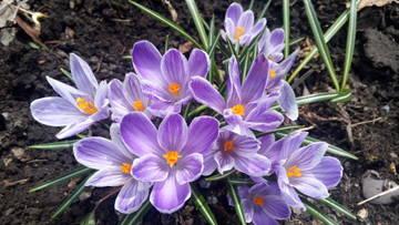 Весна идет!!! - Страница 21 OGRSM