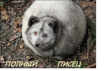 http://s3.uploads.ru/t/oVS8h.png
