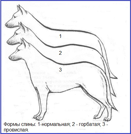 http://s3.uploads.ru/t/p4Wlc.jpg