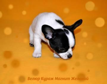 http://s3.uploads.ru/t/pDP74.jpg