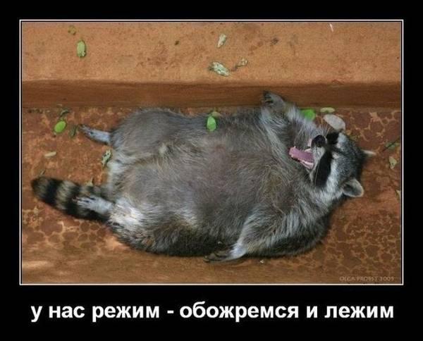 http://s3.uploads.ru/t/pH0s1.jpg