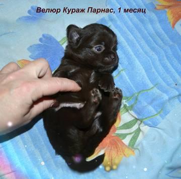 http://s3.uploads.ru/t/pt927.jpg