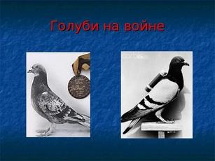 http://s3.uploads.ru/t/q1bOr.jpg