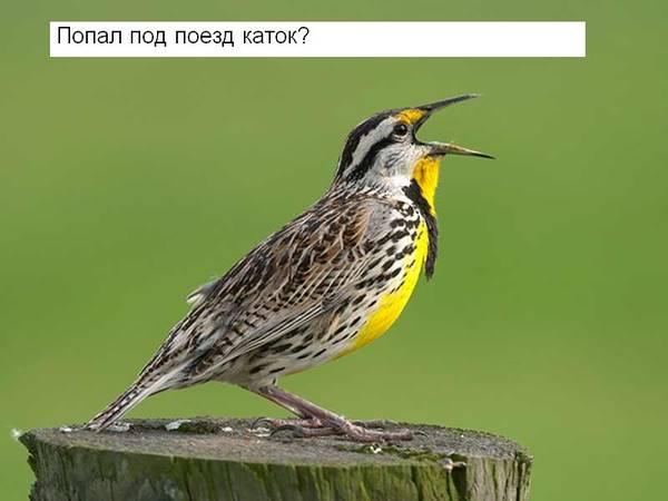 http://s3.uploads.ru/t/r7hTH.jpg