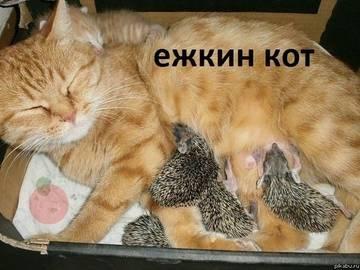 http://s3.uploads.ru/t/t2hLd.jpg